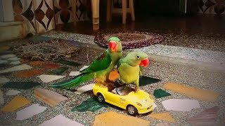 Funny Birds 🐦🐦 Funniest Parrots Ever (Part 2) [Funny Pets]