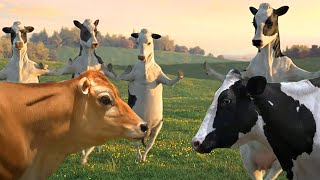 FUNNY COW DANCE 4 │ Cow Song & Cow Videos 2021