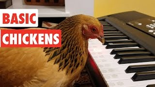 Download Basic Chickens | Funny Chicken Video Compilation 2017 Mp3 and Videos