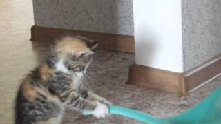 Анфиса-котенок и совок