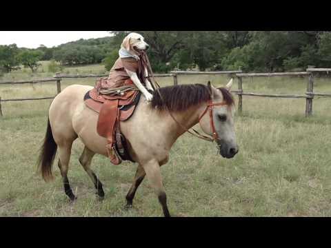 Dog rides her Horse