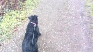 Im wald spazieren 2 Hunde einöd Rocky und Kash