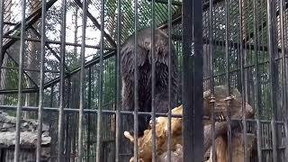 Развлечения малышки медвежки