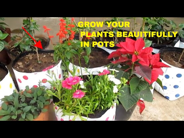 ???? ??? ???? ?? ???????? ??  ???? ?? ?????? ????? ???? ?? ? ???? ! HOW TO GROW PLANTS DECORATIVELY