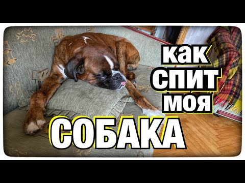 Как спит моя собака