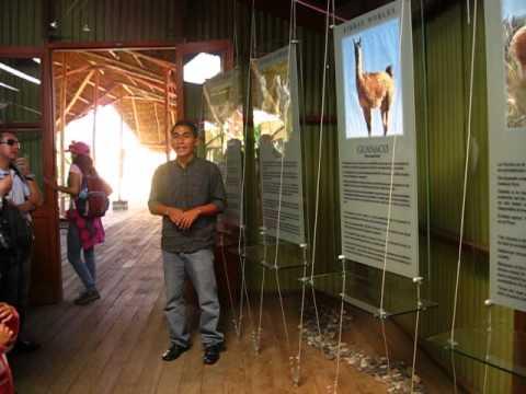 Vive la experiencia de la Alpaca - Arequipa Peru