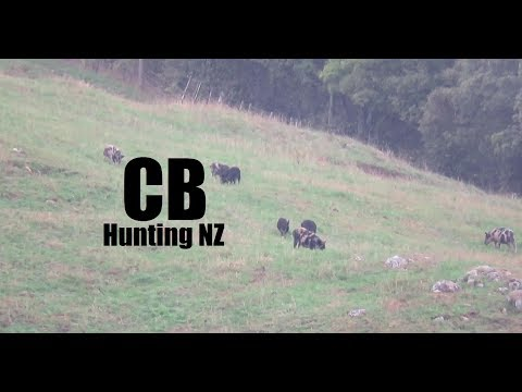 Winter Pig Hunting NZ