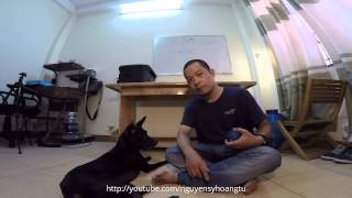 DẠY CHÓ CƠ BẢN: Bài 6: Tập chó chơi trò chơi - giảm STRESS