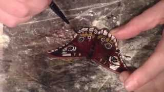 How to Make a Leather Buckeye Butterfly Barrette Narrated Time Lapse Tutorial