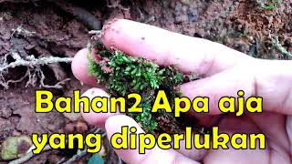Sukses Adaptasi Moss Darat Menjadi Moss Air Untuk Aquascape Youtube