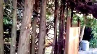 How To Build Level Pre Fab Panel Fence On Property Line Tree Roots, Diy