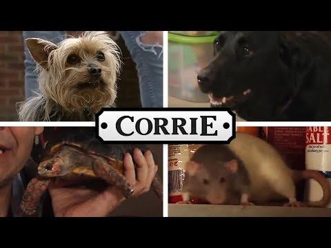The Animals of Coronation Street - Coronation Street