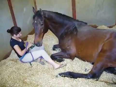 Девушка и лошадь  Потресающее видео