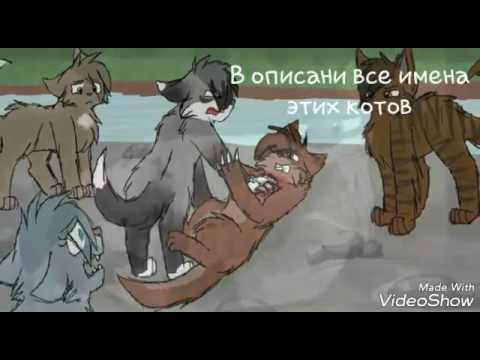 Кот сумрачного леса