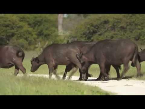 Safaridays at Hwange National Park