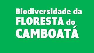 Conheça a biodiversidade da Floresta do Camboatá que pode acabar por causa de um autódromo.