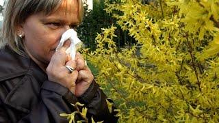 Alerte aux pollens : l'allergie gagne t-elle du terrain ?
