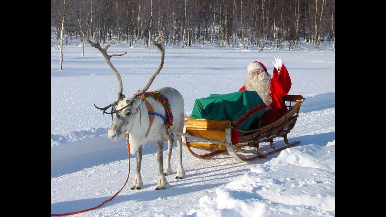 b30bccd607bc8 Reno   Papá Noel - Los secretos de renos de Santa Claus Laponia Finlandia  Rovaniemi Polo Norte