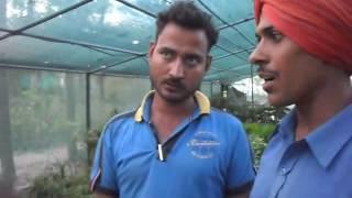 Nursery Plants Name in Urdu - Hindi , Home Nursery , Gardening Tips , How to Grow