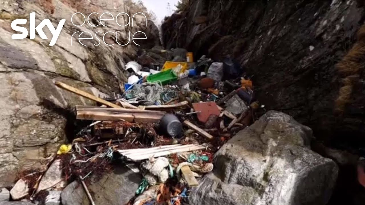 Clean-up movement sparked by plastic whale