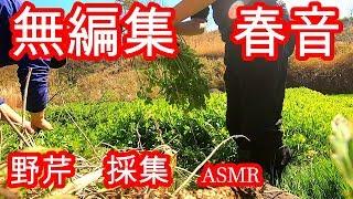 (ASMR) 野芹 採集してるだけの動画