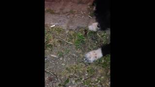 Dogs akrep savaşı