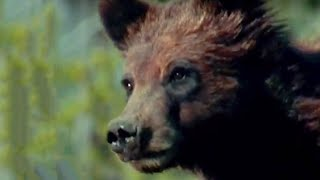 Howling at the Forest | Transylvania Living with Predators | BBC