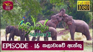 Sobadhara - Sri Lanka Wildlife Documentary | 2019-07-05 | Sri Lankan Elephant Thumbnail