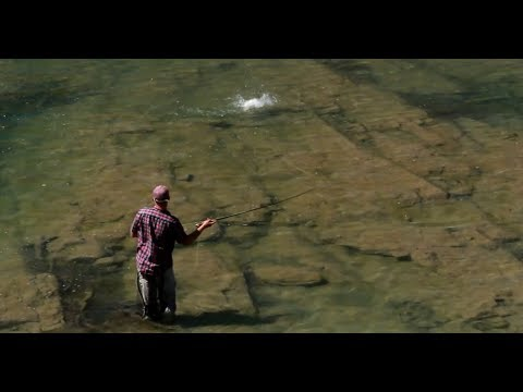 ORVIS - Dry Fly Tactics - Casting to Cruising Trout
