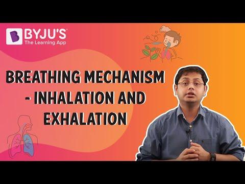 Breathing Mechanism - Inhalation And Exhalation