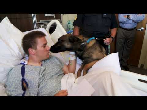Mikey - Awesome. K9 Leon Visits Injured Auburn, Alabama Police Officer in Hospital