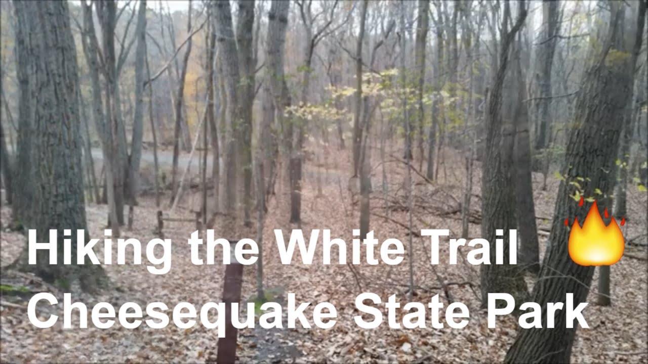The White Trail- Cheesequake State Park, Old Bridge, NJ
