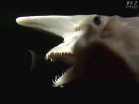 Goblin Sharks Gif