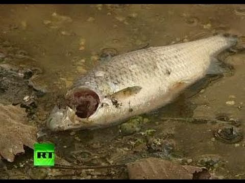 Hungary red sludge spill as big as Gulf of Mexico leak?