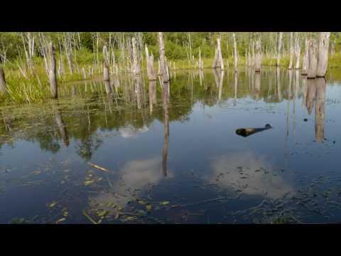 Nova Scotia Still Water Time Lapse