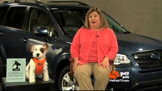 Which Pet Car Harness Is Safest?