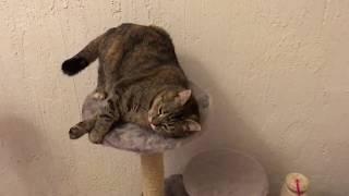Приколы. Кошачья мята и коты. Пьяные коты и кошки чюдят.