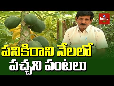 Farmer Nagaratnam Naidu Success Story in Natural Farming