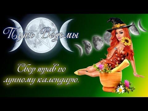 Путь Ведьмы - Сбор трав по лунному календарю. Магия Викка #33
