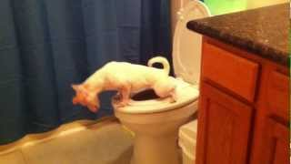 Dog Pees in the Toilet