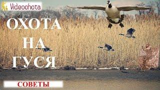 Охота на гуся! СОВЕТЫ  - Videoohota