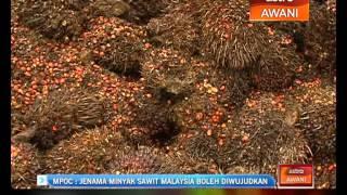 Masa yang sesuai wujudkan jenama minyak sawit Malaysia