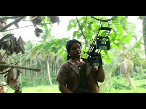 Ground Report-Kerala-Women Coconut tree Climbers-Palakkad