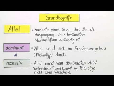 Erbgänge: dominant-rezessiv, intermediär und kodominant ...