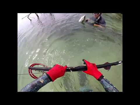 Spearfishing/Freediving Adventure Sw Florida