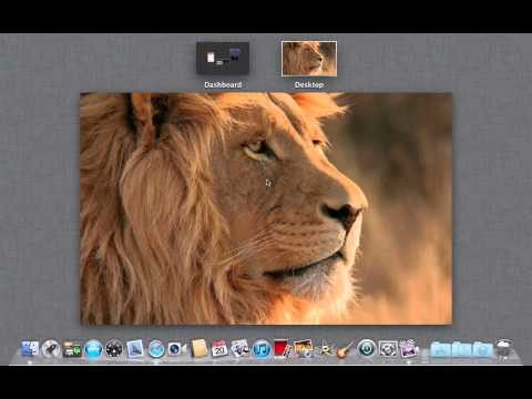 the main features of lions