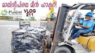 മാലിദ്വീപിലെ മീൻ  ഫാക്ടറിയുടെ കാഴ്ചകൾ  Fish Factory Maldives Maldives Travel Vlog Part 9