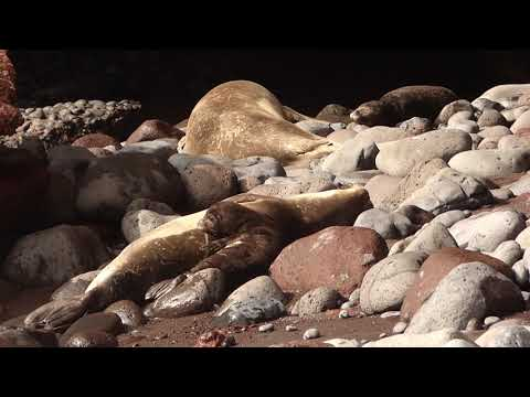 Rancho Texas Lanzarote Park participa de los proyectos de recuperación de la foca monje