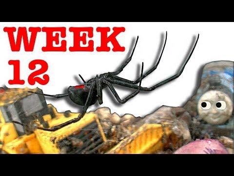 Deadly Redback Black Widow Spider Nightmare Starts Over Week 12