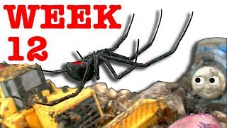Deadly redback black widow spider nightmare starts over week 12